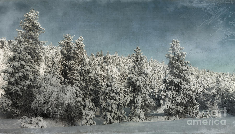 Trees Photograph - With Love - Winter  by Beve Brown-Clark Photography