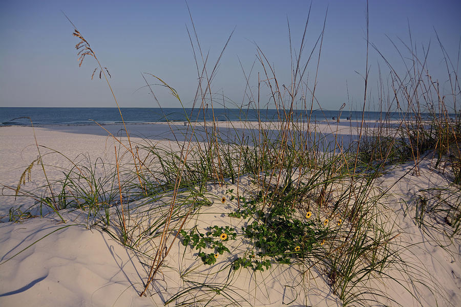 Clearwater Beach Photograph - Withering Dunes by Ben Prepelka