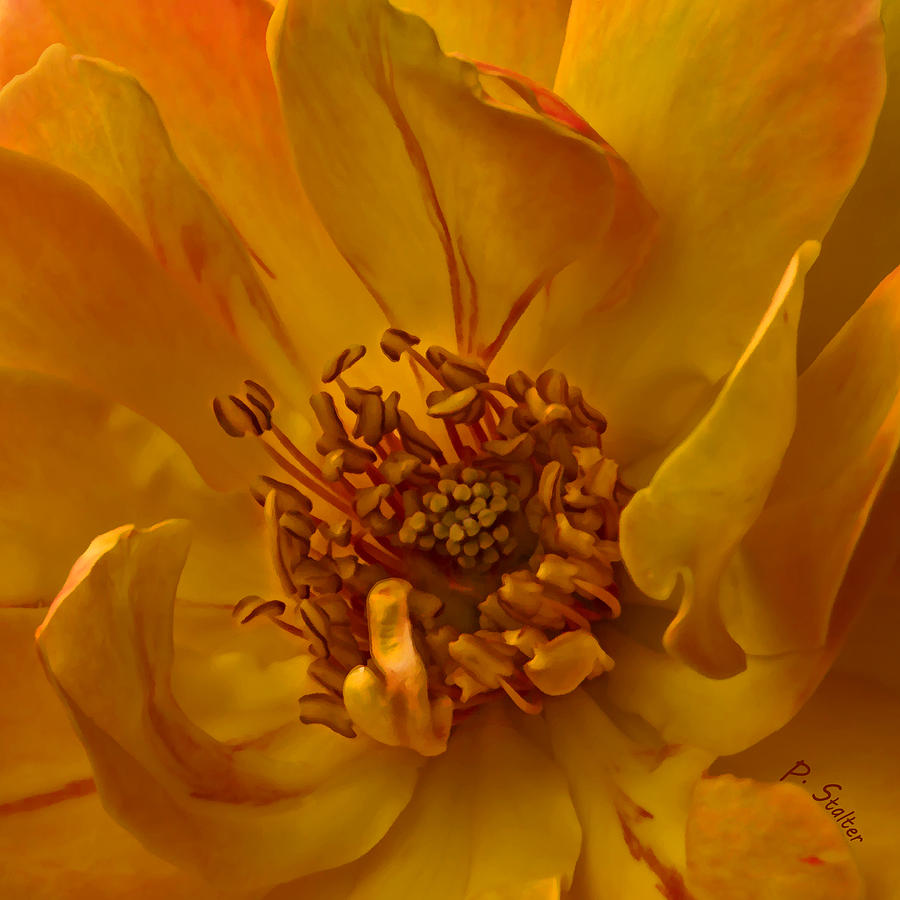Yellow Digital Art - Within by Patricia Stalter