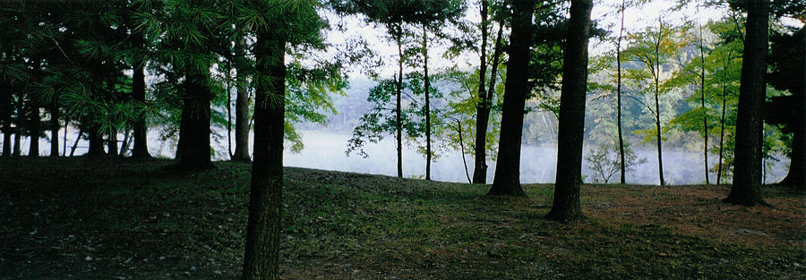 Forest Photograph - Within Sight Of A Lake by Tom Hefko
