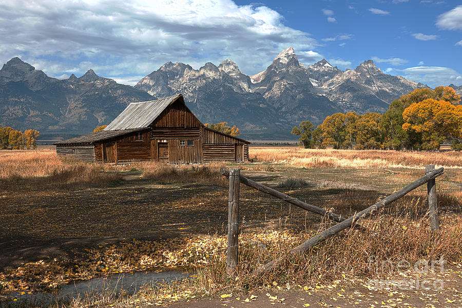 Grand Tetons Photograph - Withstanding The Test Of Time by Sandra Bronstein