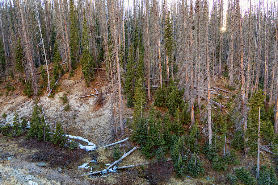 Wolf Creek Photograph - Wolf Creek Pass Forest Landscape by James BO Insogna