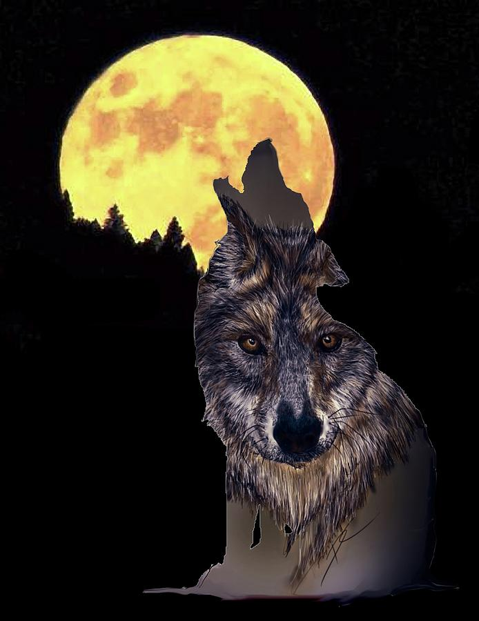 Wolf howling at the moon by Darren Cannell