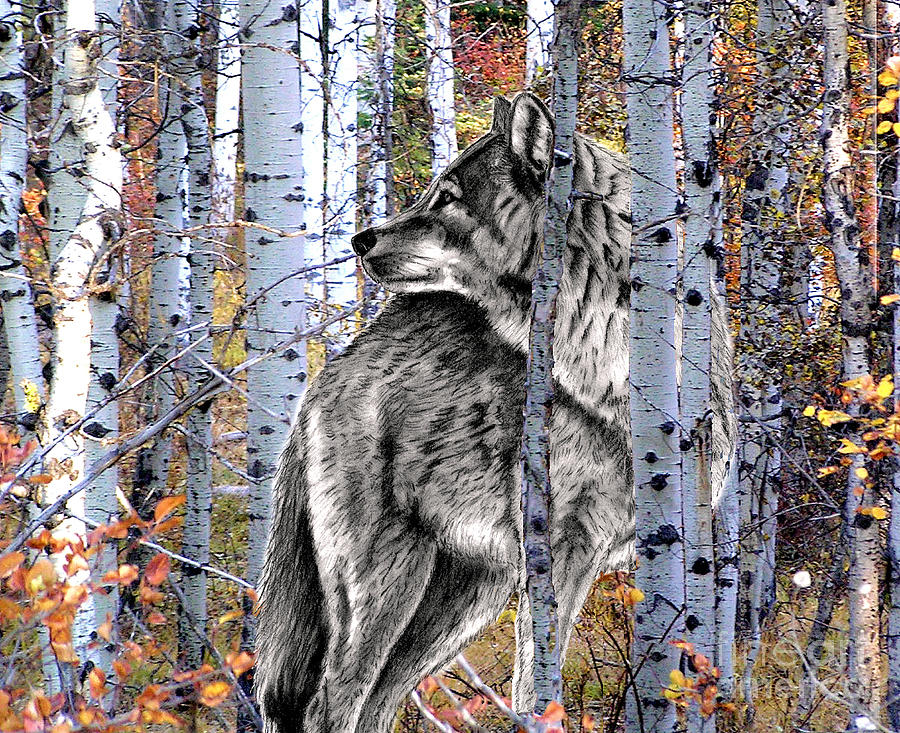 Волк и лес рисунок
