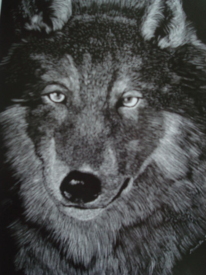 Wolf Drawing - Wolf by Marcella Jackson