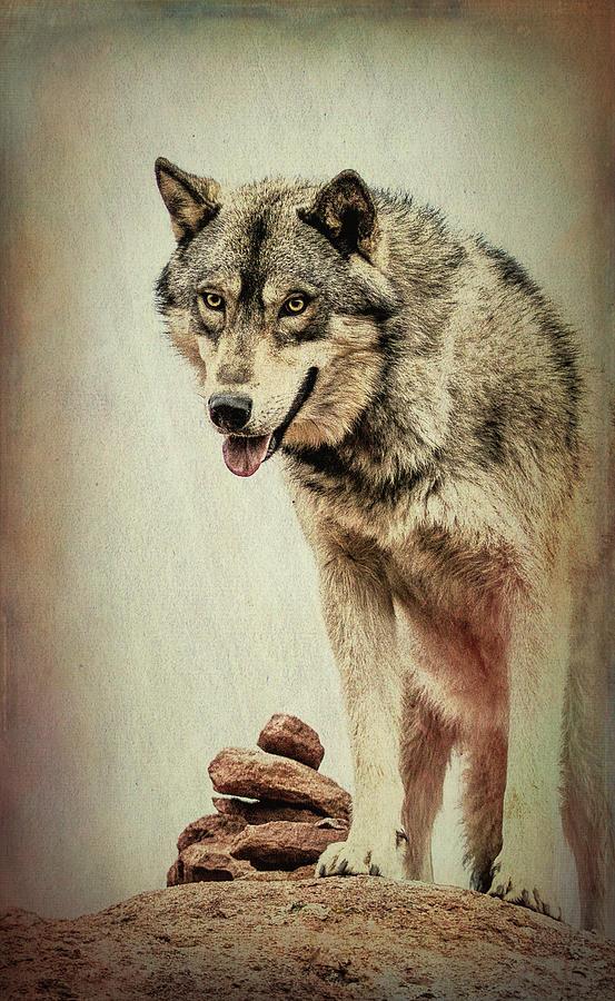 Wolf Wonder by Vicki Stansbury