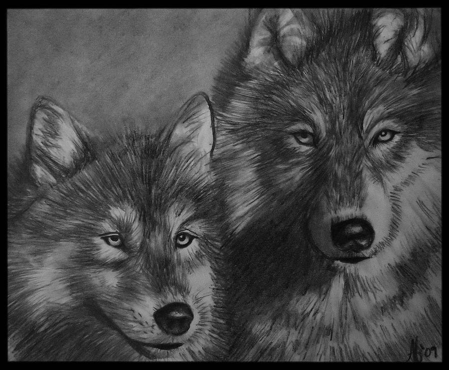 Wolf Drawing - Wolves by Alycia Ryan