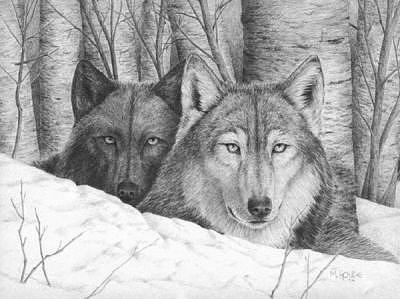 Wolves In Winter Drawing by Marc Houde