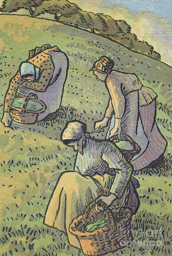 Gardener Painting - Women Gathering Mushrooms by Camille Pissarro