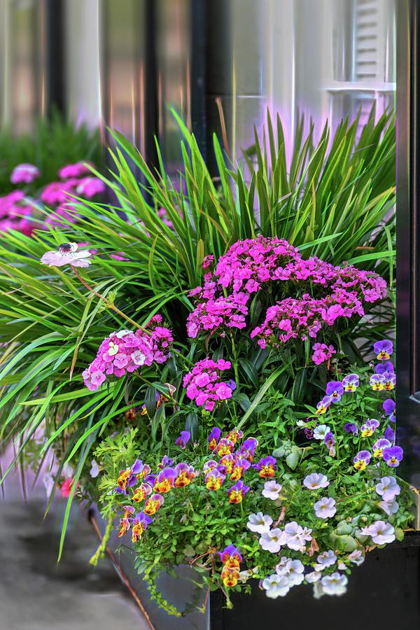 Wonderful Window Boxes of Charleston by Cindy Lark Hartman