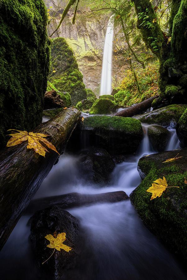 Wonderland in the Gorge by Bjorn Burton