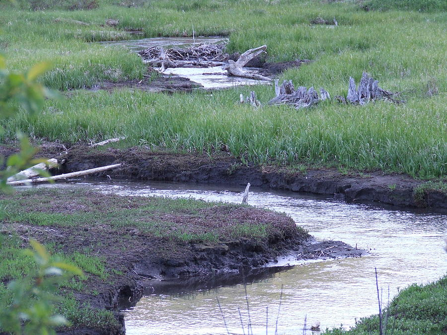 Water Photograph - Wonding Creek by Paul Cameron