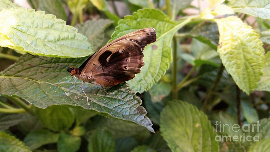 Butterfly Photograph - Wood Butterfly by Michael MacGregor