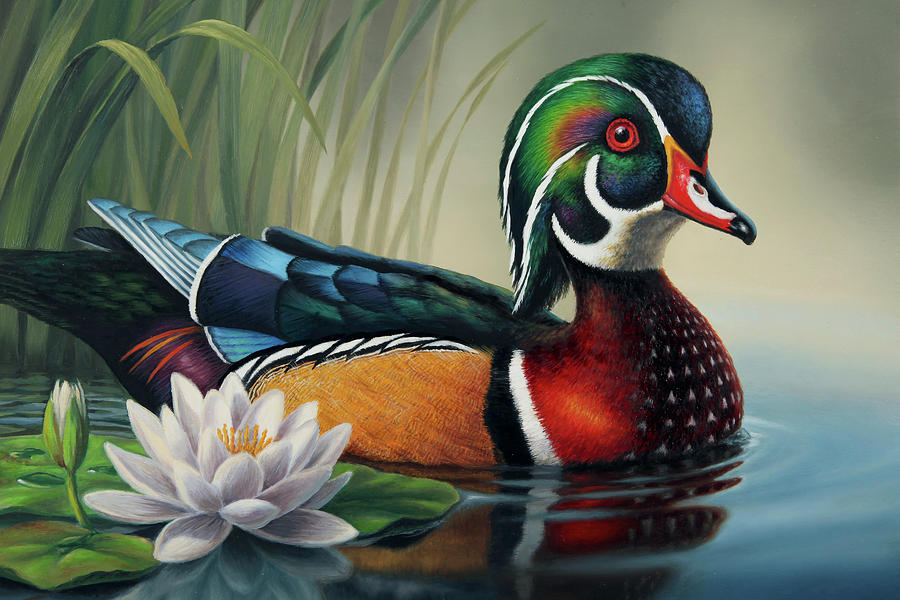 Wood Duck And Lily Pad By Guy Crittenden