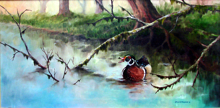 Wood Duck Painting - Wood Duck by David  Maynard
