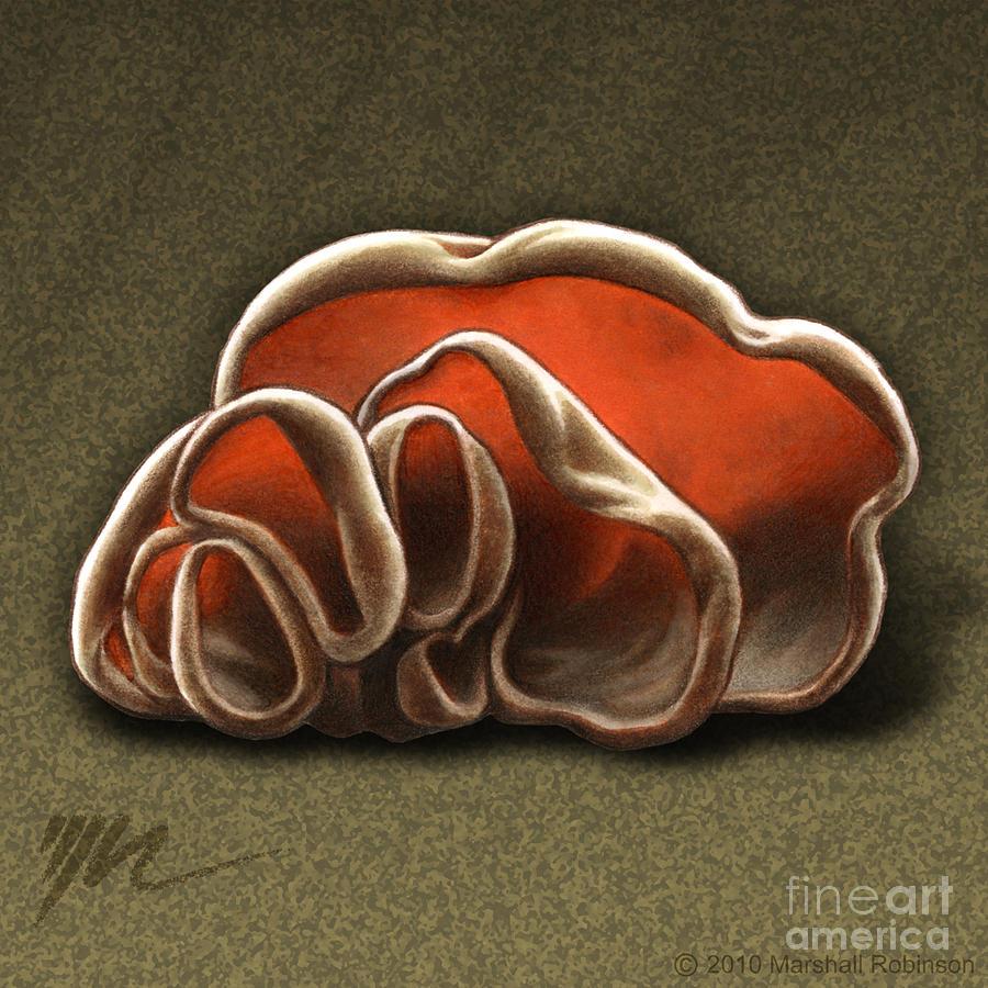 Wood Ear Painting - Wood Ear Mushrooms by Marshall Robinson