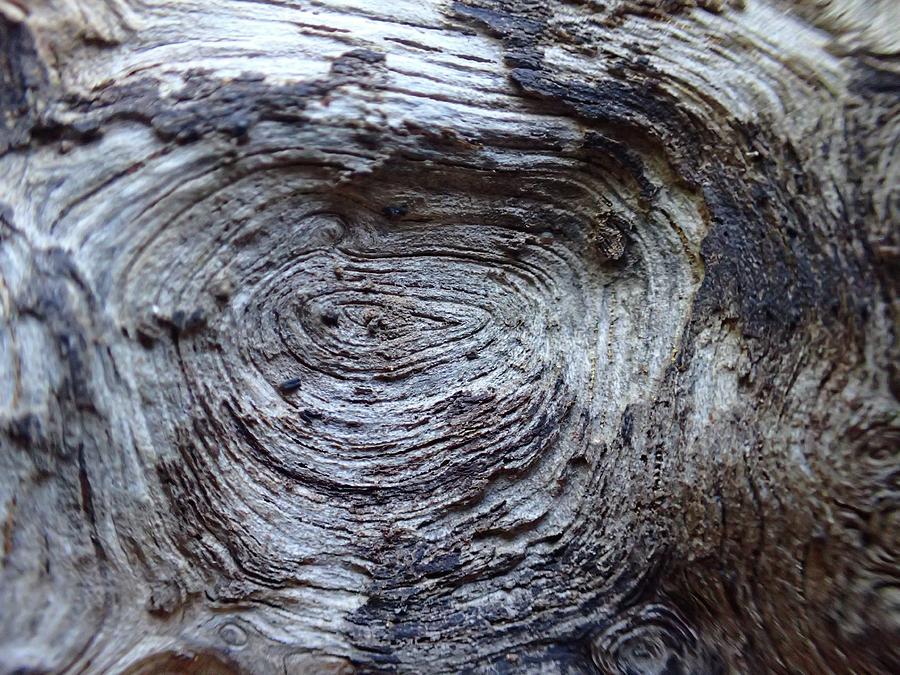 Wood Photograph - Wood Grain Of Buena Vista  by Lora Louise