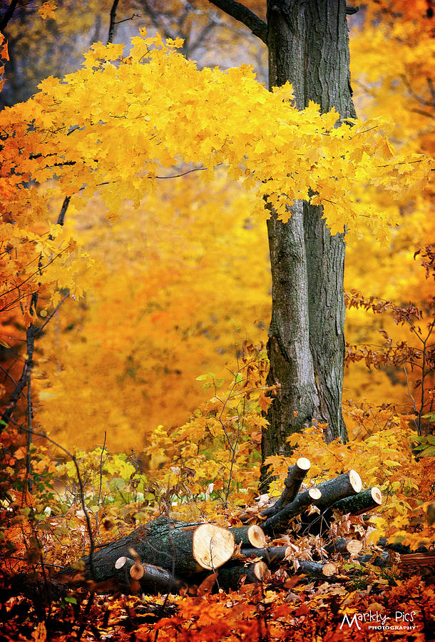 Wood Photograph - Wood Pile In Autumn by Mark Steigenga