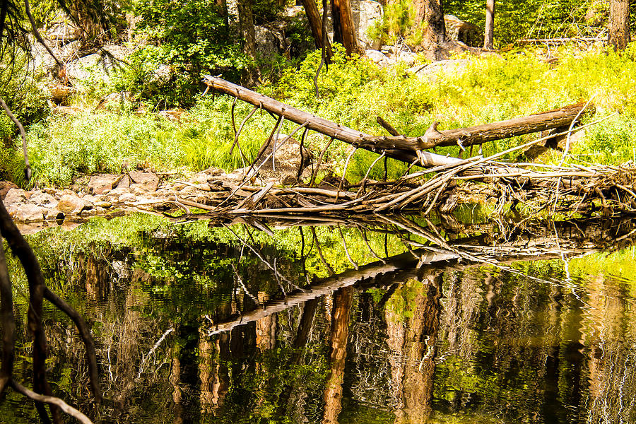 Acrylic Prints Photograph - Wood Reflections by Brian Williamson