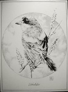 Wildlife Drawing - Woodchat by Bobby Kro