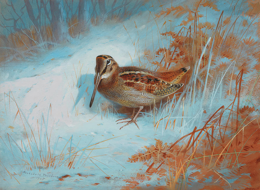 Woodcock Painting - A Woodcock In The Snow by Archibald Thorburn
