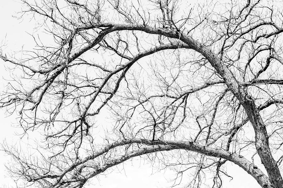 Wooden Arteries Photograph
