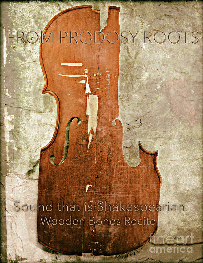 Cello Photograph - Wooden Bones Recite  by Steven Digman