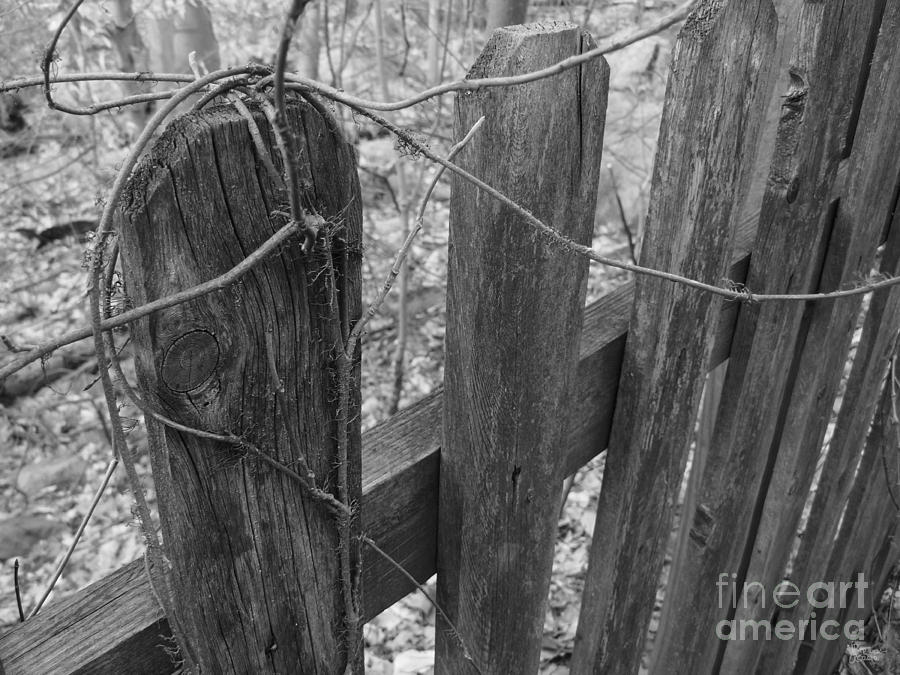 Fence Photograph - Wooden Fence by Jeff Breiman