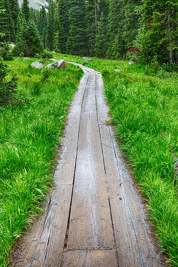 Wooden Forest Path Photograph