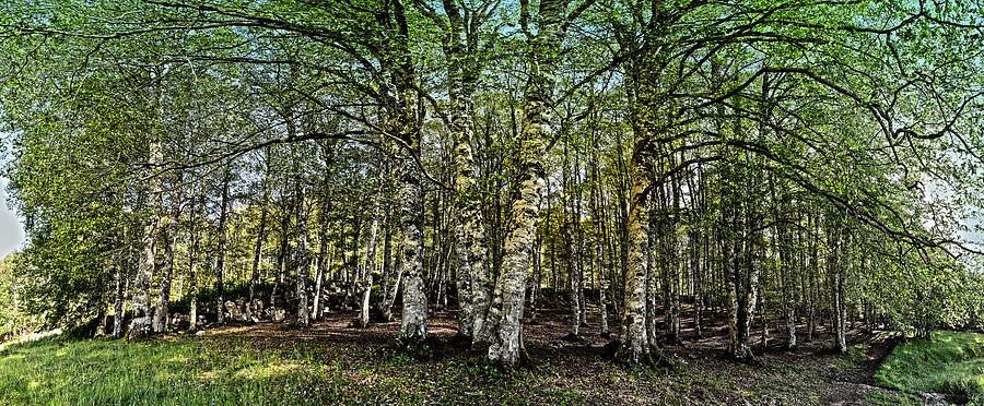 Woodland by Alessandro Della Pietra