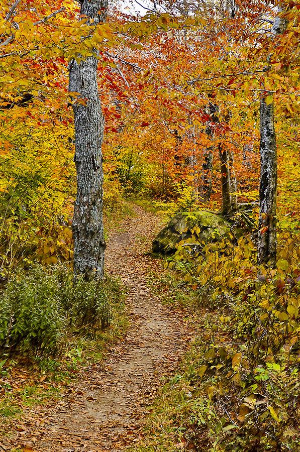 Woodland Autumn Trail Photograph