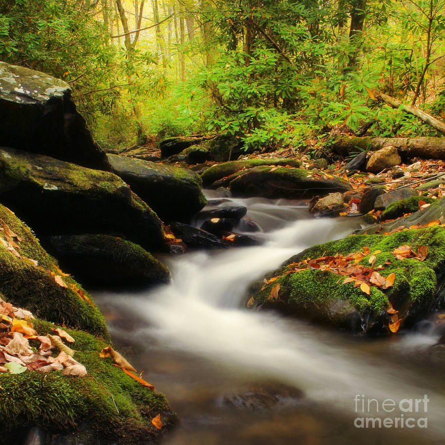 Autumn Photograph - Woodland Fantasies by Darren Fisher