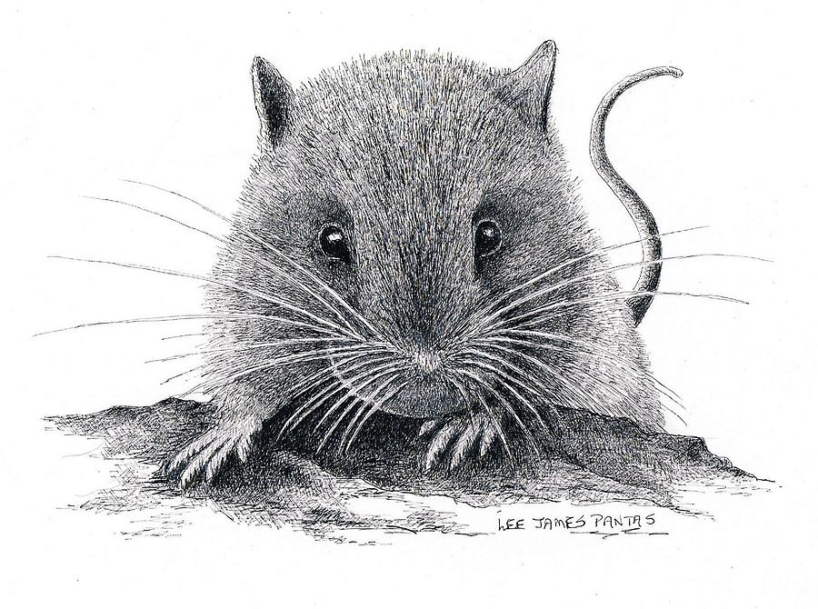 Mouse Drawing - Woodland Jumping Mouse by Lee Pantas