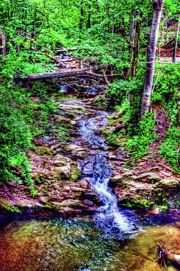 Woodland Stream by Andy Lawless