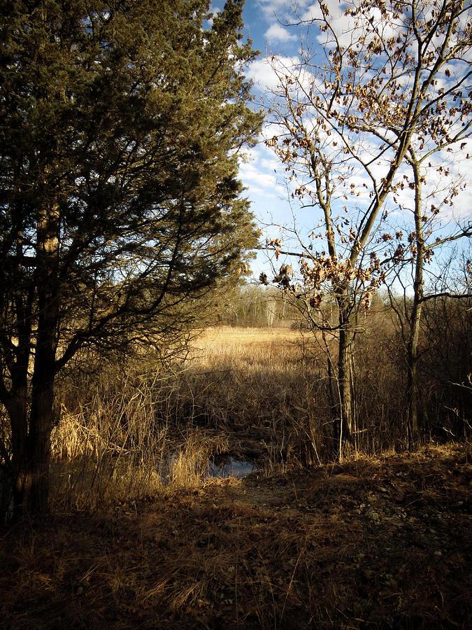 Woodland View  Photograph by Kimberly Mackowski