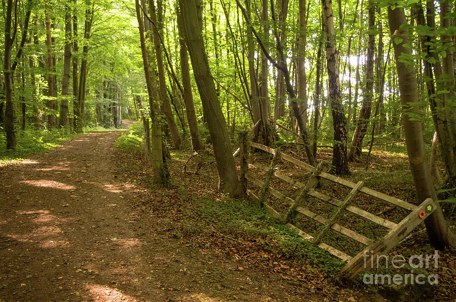Woodland Walk Photograph by Chris Horsnell