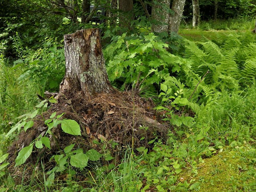 Tree Trunk Photograph - Woodlands in the Summer by Nancy De Flon