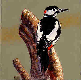 Woodpecker Painting - Woodpecker by Dy Witt