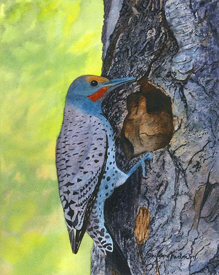 Woodpecker Painting - Woodpecker by Sharon Farber