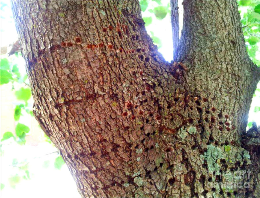 Woodpeckers Dream by Brianna Kelly