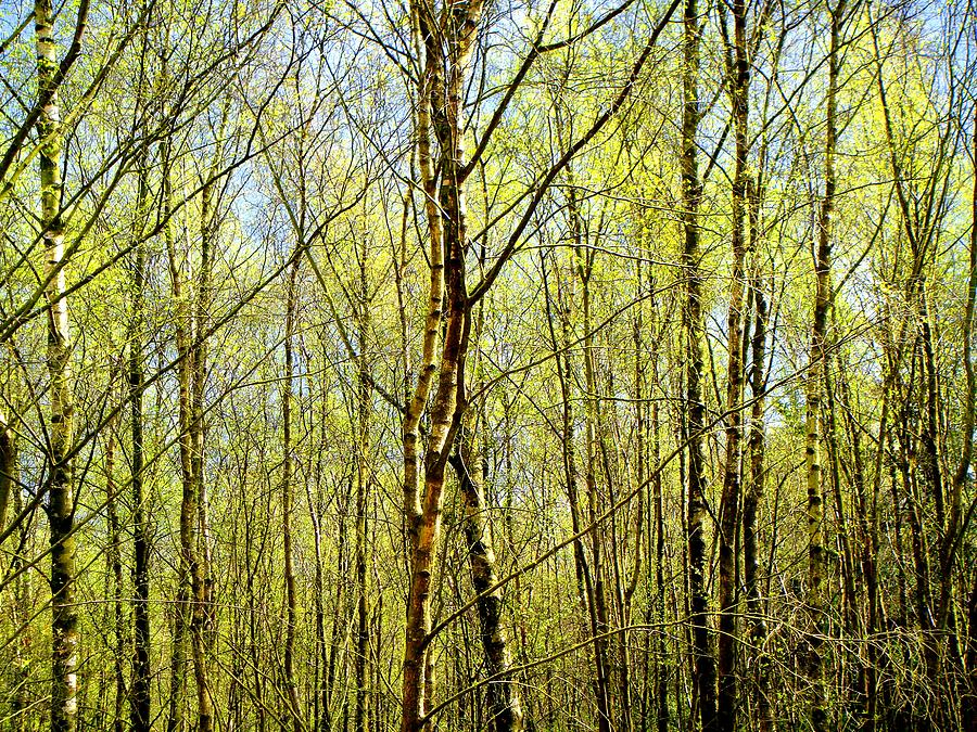 Trees Photograph - Woods 2 by Roberto Alamino
