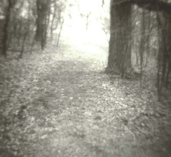 Landscape Photograph - Woods by Dale Shenefelt