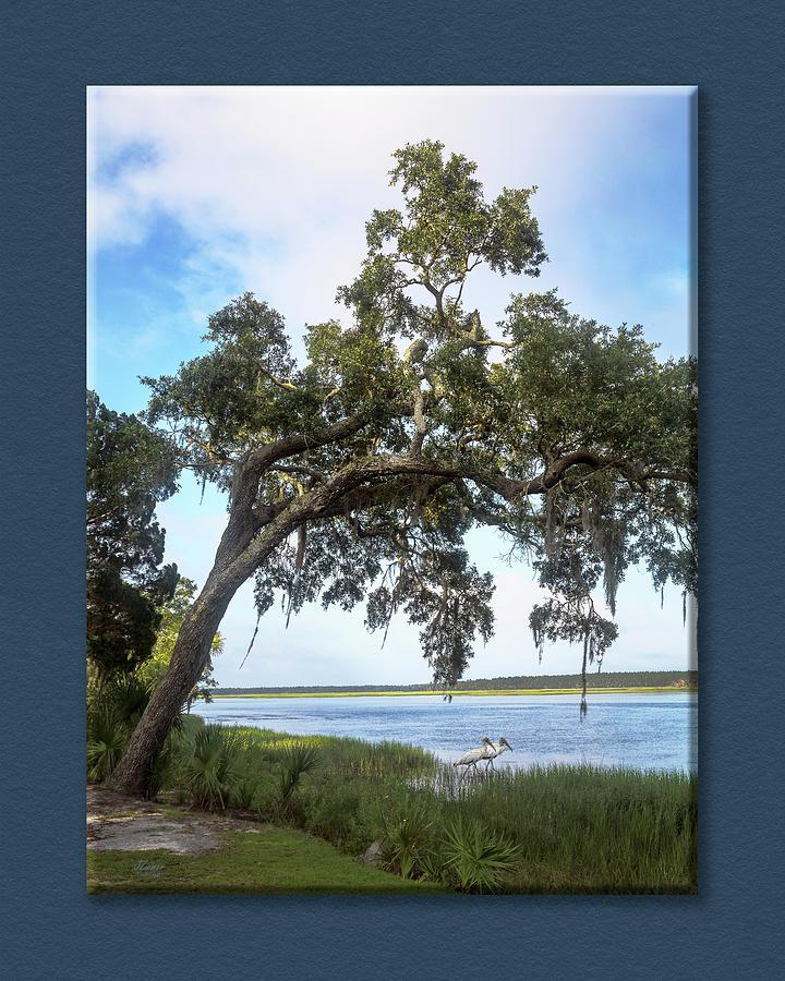 Wood Storks Photograph - Woodstorks At Oak Grove Island by Jim Ziemer