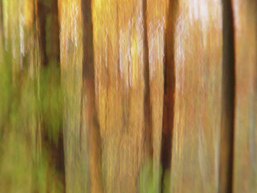 Woodsy by Bernhart Hochleitner