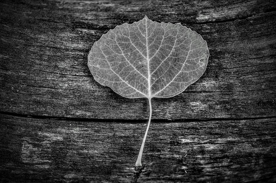 Woody Leaf by Michael Brungardt