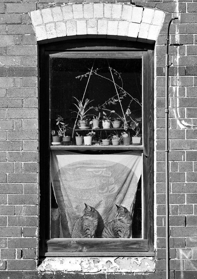 Sydney Photograph - Woolloomolloo Window With Cats by Barry Culling