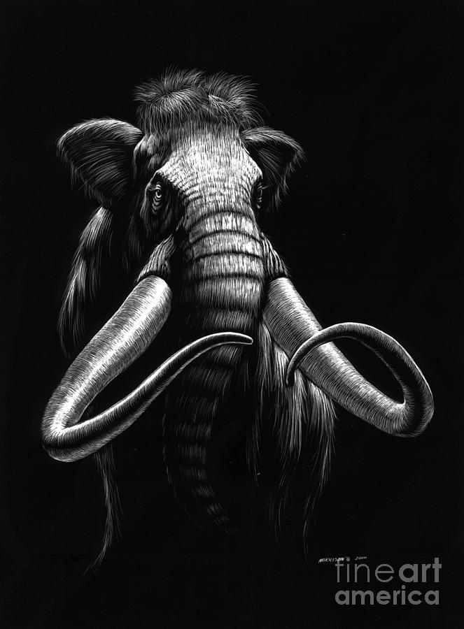 Wildlife Drawing - Woolly Mammoth by Stanley Morrison