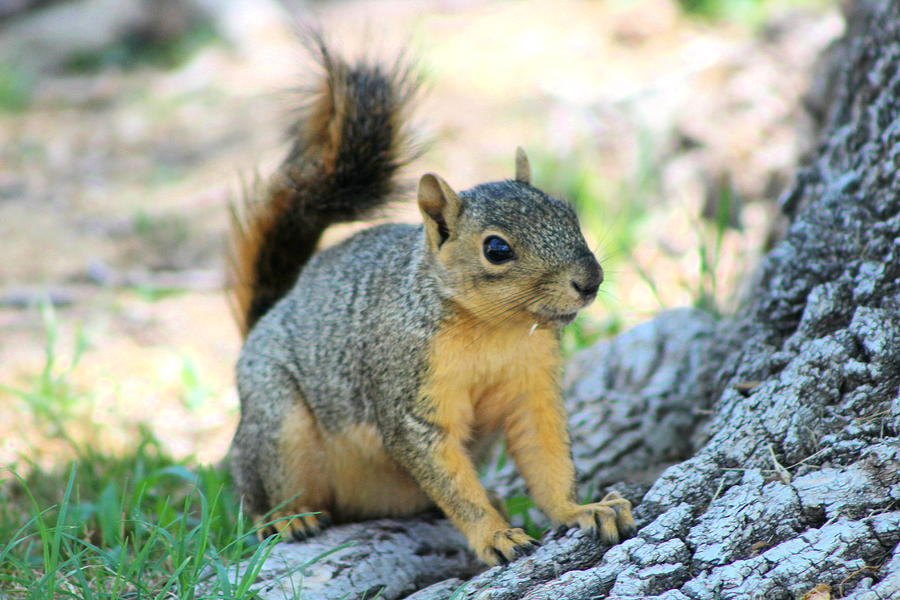 Squirrel Photograph - Work It by Colleen Cornelius