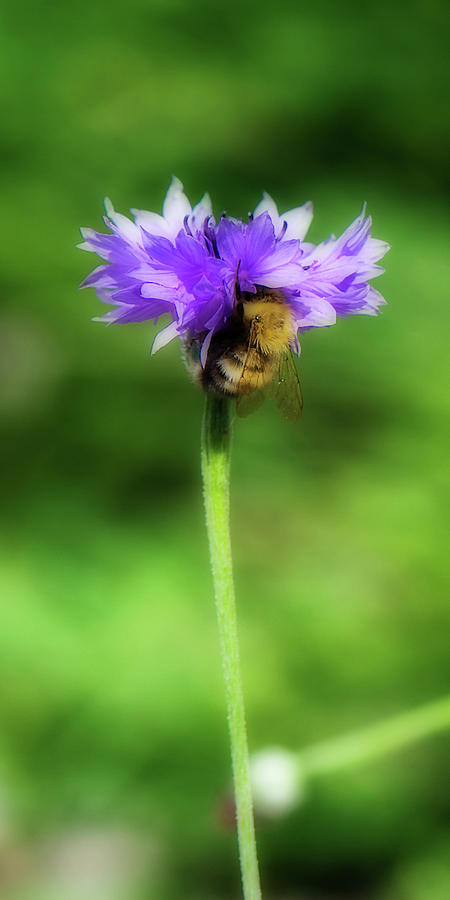 Bee Photograph - Work Mundane - Change Your Perspective by Lisa Knechtel