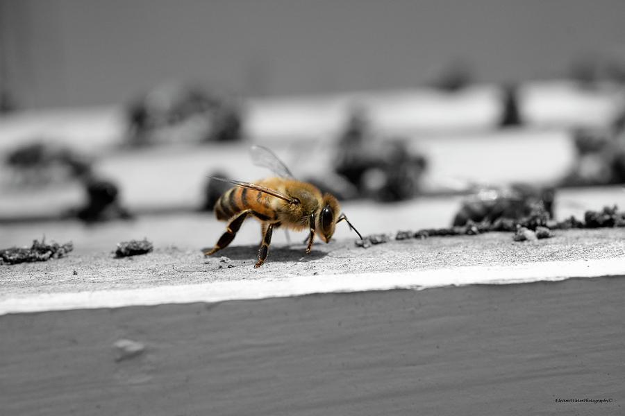 Honey Photograph - Worker Bee by Alana Krantz